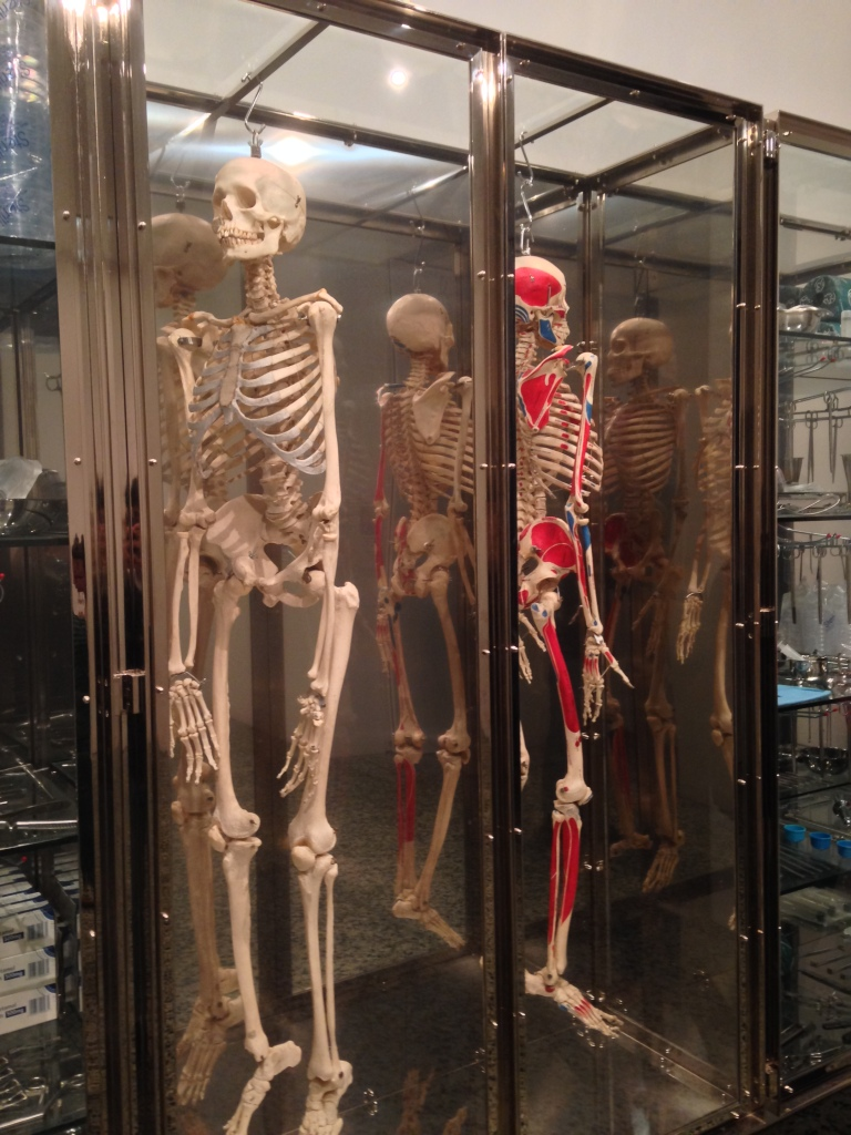 Real human skeletons